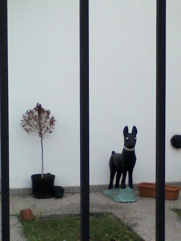 Dos muertitos. Foto de Julia Moretti. City Bell, La Plata, Argentina. Marzo 2012.