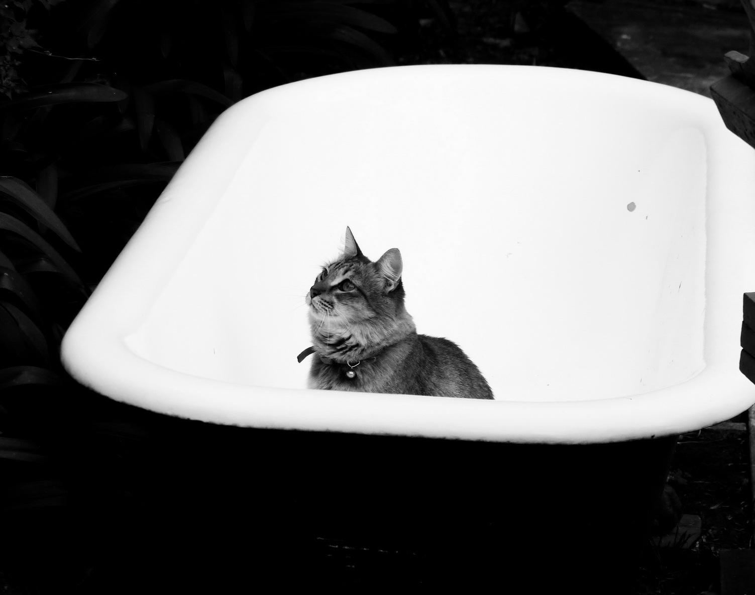 Gata Nina Suricata en bañera en estado de atención galáctica zen. Por AMILCAR MORETTI. Julio 2014. Argentina.